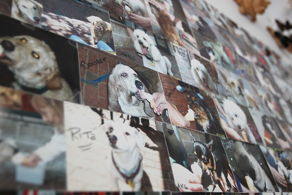 Photos of dogs enjoying ice cream cones cover an entire wall in Rita's Italian Ice in the East India Square Mall in Salem. David Le/Staff Photo