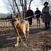 Karin Stolle, of Marblehead, right, walks her dog along the northern part of the Danvers Rail Trail as part of the Danvers Bi-Peds Chocolate Stroll on Saturday afternoon. David Le/Salem News