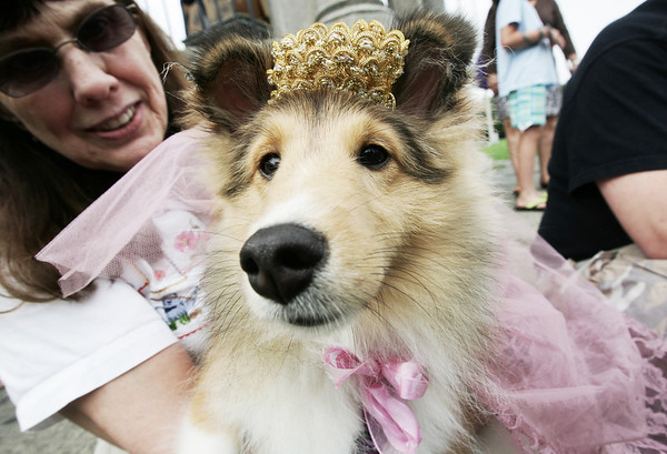 Dressed as Princess Dianna, Anna, sits with her ownwer, Lorraine Allison of Salem after performing for the judges during the annual Heritage Days Dog Show. This year's theme for the show was Hollywood Days. Photo by Deborah Parker/August 2, 2009