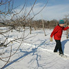 Peabody: Roger Tupping of Swampscott makes his way through apple orchards while cross country skiing with his daughter, Cordelia, 11, at Brooksby Farm Saturday afternoon. Photo by Deborah Parker/Salem News Saturday, January 3, 2009.