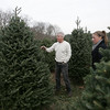 For ten years, Henry Bertolon, has been growing christmas trees, on what used to be the Johnson tree farm in Beverly. This is the first year that Bertolon will have the farm open for business. Bertolon planted about 13,000 trees, with any revenue over his cost, being donated to charity. Here Bertolon walks through the property with his daughter Jenn. photo by deborah parker/november 23, 2010