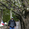 Joe Paluzzi of Salem has walked every street in several North SHore towns and is now working his way through Marblehead. A tree frames Paluzzi as he walks down Chestnut Street in Marblehead. Photo by Deborah Parker/April 13, 2010<br /> hotos, Joe Paluzzi of Salem has walked every street in several North SHore towns and is now working his way through Marblehead. A tree frames Paluzzi as he walks down Chestnut Street in Marblehead. Photo by Deborah Parker/April 13, 2010<br /> hotos