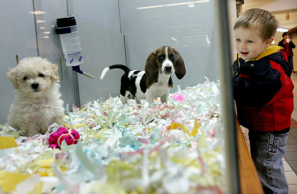 Peter Reinbold, 2, of Beverly laughs as two puppies play together while at the new Pet Express store in the Liberty Tree Mall. Photo by Deborah Parker/November 23, 2009