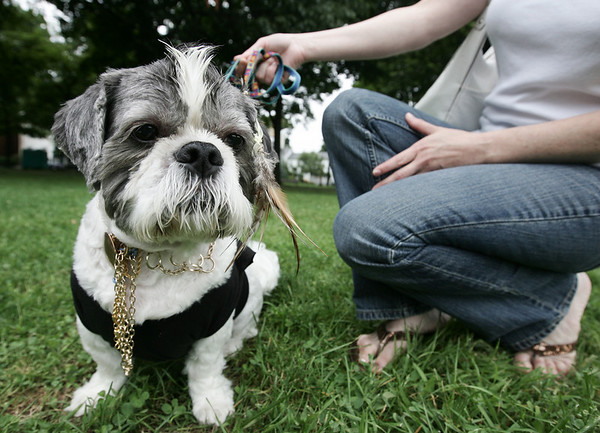 Dressed as Mr. T, Rascal from Peabody sits with his ownwer, Linda St. Pierre of Peabody after performing for the judges during the annual Heritage Days Dog Show. This year's theme for the show was Hollywood Days. Photo by Deborah Parker/August 2, 2009