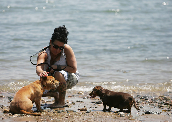 Maria Totilo of Danvers drips some water on her dog Molly to help her stay cool while at Dane Street Beach with her two dogs, Molly and Daisy Tuesday afternoon. Photo by Deborah Parker/May 25, 2010<br /> , Maria Totilo of Danvers drips some water on her dog Molly to help her stay cool while at Dane Street Beach with her two dogs, Molly and Daisy Tuesday afternoon. Photo by Deborah Parker/May 25, 2010
