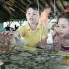 Justin Perez, 4, of Salem, and his sister, Miclaire, 6, examine a real duckbill dinosaur egg presented by Natural Discoveries of North Andover, while at the Annual Read Science and Family Picnic at Salem Willows Saturday. The event, open to all Salem Elementary school students and their families, featured science tables along with access to food and rides at the Willows. Photo by Deborah Parker/June 20, 2009