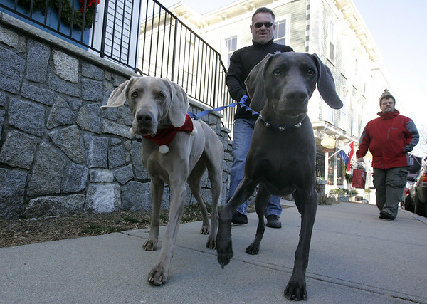 "Marblehead: Dressed in their holiday attire, Lili and Lukas stoll down Pleasant street with Mike Weever and Donald Grimes of Swampscott. ""We're just out enjoying the cold, brisk weather,"" said Grimes.<br /> Photo by Deborah Parker/Salem News Saturday, December 13, 2008"