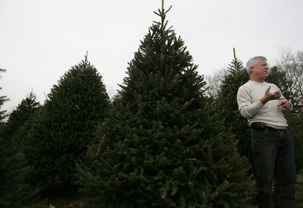 For ten years, Henry Bertolon, has been growing christmas trees, on what used to be the Johnson tree farm in Beverly. This is the first year that Bertolon will have the farm open for business. Bertolon planted about 13,000 trees, with any revenue over his cost, being donated to charity. photo by deborah parker/november 23, 2010