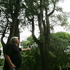 Wenham resident, Bob Hutchins stands beneath two trees on his property that the Beverly Airport Commission would like to trip 40 feet off of, as they say it is a hazard to incoming aircraft. Hutchins disagrees and says that many of the surrounding trees are the same height if not taller. Photo by Deborah Parker/June 17, 2010<br /> , Wenham resident, Bob Hutchins stands beneath two trees on his property that the Beverly Airport Commission would like to trip 40 feet off of, as they say it is a hazard to incoming aircraft. Hutchins disagrees and says that many of the surrounding trees are the same height if not taller. Photo by Deborah Parker/June 17, 2010