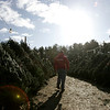 Mike Marini of Marini Farms in Ipswich takes a walk through their stock of Christmas Trees on a cold Thursday morning. The 2,000 pre-cut trees are part of Christmas on the Hill put on by the farm during the holiday season including holiday greenery, wreaths, sleigh rides and more. photo by deborah parker/december 9, 2010