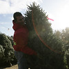 Mike Marini of Marini Farms in Ipswich organizes one of their many Christmas Trees on a cold Thursday morning. The 2,000 pre-cut trees are part of Christmas on the Hill put on by the farm during the holiday season including holiday greenery, wreaths, sleigh rides and more. photo by deborah parker/december 9, 2010