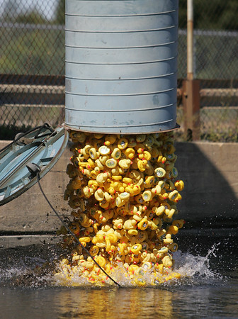 "Hundreds of rubber ducks are released into the water as part of the 16th annual Danvers Kiwanis Club's ""Rubber Duck Race"" held at Pope's Landing Saturday. Photo by Deborah Parker/September 19, 2009"