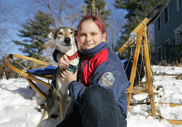 12-year-old Lily Stewart, with one of her racing dogs, Yoshi, will compete in the upcoming sled dog races in Hamilton at the Myopia Schooling Field. Photo by Deborah Parker/January 6, 2009