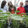 Beverly: Glen Urquhart students, from left, Abby Landers, Katy Tabler, Jack Hay and Parker Malarkey all check out the newly renovated greenhouse at the school. Photo by Deborah Parker/Salem News Tuesday April 8, 2009.
