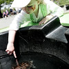 Scarlet Kindle, 2, of Marblehead reaches down in the water to touch a turtle on display in a small pool during the MassAudubon nature festival held at the Ipswich River Wildlife Sanctuary Sunday. Photo by Deborah Parker/May 31, 2009