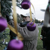 John Scrima of Reading, hangs an ornament on a tree as part of a Holiday Candlelight Service at Puritan Lawn Memorial Park in Peabody Sunday afternoon. photo by deborah parker/decemebr 5, 2010