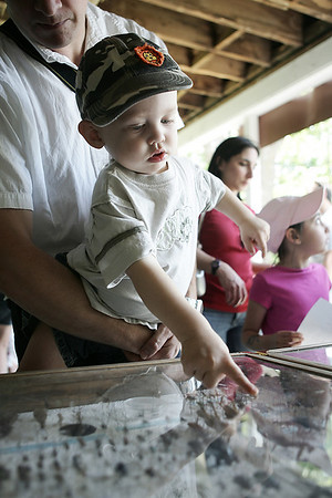 Held in the arms of his dad, Ken, Ethan Goulding, 2, of Malden points to various insects in display cases during the MassAudubon nature festival held at the Ipswich River Wildlife Sanctuary Sunday. Photo by Deborah Parker/May 31, 2009