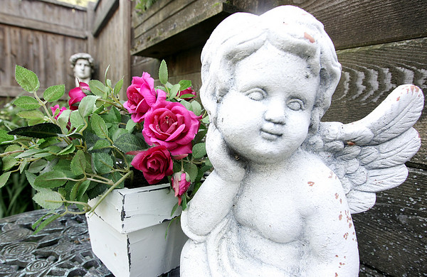 "Ellen and Paul Marchands' garden won a ""Best of Beverly"" Award in 2008 for best large newly established flower garden. Its features include a pool, evergreen and deciduous shrubs and perennials. The garden will be featured during The Friendly Garden Tour in Beverly on June 27. Here a cherub statue sits next to a small pot of roses.  Photo by Deborah Parker/June 17, 2009"