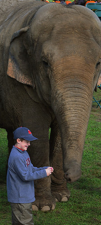 Topsfield:<br /> Paul Canning, 8, of Peabody participated in a game of Simon Says during the birthday party for Beulah the elephant at the Topsfield Fair Wednesday morning. Beulah turned 43 years old. <br /> Photo by Ken Yuszkus/Salem News, Wednesday, October 5, 2011.