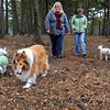 Beverly:<br /> From left, Susan Whitelocks' dog Bentley,Tina McManus' dog, Casey, Susan Whitelocks, volunteer, Tina McManus, co-chair, Ilene MacDonald's dog Howie, and Ilene MacDonald, co-chair, of the Beverly Dog Park Committee, at the new dog park.<br /> Photo by Ken Yuszkus/Salem News, Wednesday, October 26, 2011.