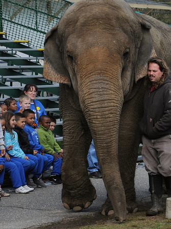 Topsfield:<br /> Beulah the elephant is led into the grandstand area by Jerry Deziel to celebrate her 43rd birthday party at the Topsfield Fair Wednesday morning. The group sitting in the background is from the Swampscott Headstart program.<br /> Photo by Ken Yuszkus/Salem News, Wednesday, October 5, 2011.