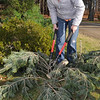 Beverly:<br /> Suzanne Beaudoin cuts branches to make bunches of various tree boughs to be sold at the Moraine Farm/Project Adventure.<br /> Photo by Ken Yuszkus/Salem News, Friday, Decmber 4, 2009.