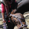 Hamilton:<br /> Lexi Chase, a 19-year-old Hamilton woman, bought a horse that was about to be shipped out for slaughter. The horse, which she has named Pipa, is the great grand-daughter of Secretariat. Pipa is rubbing her head against Lexi. <br /> Photo by Ken Yuszkus/Salem News, Thursday, April 26, 2012.