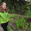 Ipswich:<br /> Cynthia Ingelfinger, of the Ipswich River Watershed Association, stands near the rain garden located at the Ipswich River Watershed Association. Greenscape gardens, like the rain garden, limit watering and fertilizer use by letting nature provide the landscapes' water and nutrient needs.<br /> Photo by Ken Yuszkus/Salem News, Thursday, May 12, 2011.