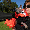 Salem:<br /> Donna DiGiovanni holds Brandon, a peterbald cat, who is in a bat costume that won the title of Best Costume, for cats, during the Bootiful Pets outdoor Halloween costume contest for dogs and cats on the Salem Common Sunday morning.<br /> Photo by Ken Yuszkus/Salem News, Sunday,  October 10, 2010.