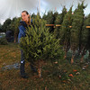 Beverly:<br /> Angel Krimm moves a Christmas tree which she just removed the string. The trees will be sold at the Moraine Farm/Project Adventure.<br /> Photo by Ken Yuszkus/Salem News, Friday, Decmber 4, 2009.