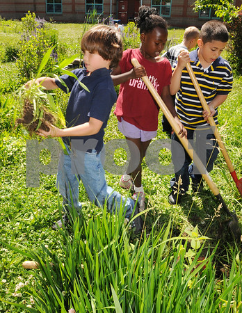 Salem:<br /> From left, Ethan Elliott, Joy Edokpa, and Jario Baez, second grade students at Bentley Elementary thin some of the vegetation to make room for more native plants in the courtyard at the school.<br /> Photo by Ken Yuszkus/Salem News, Wednesday, June 17, 2009.