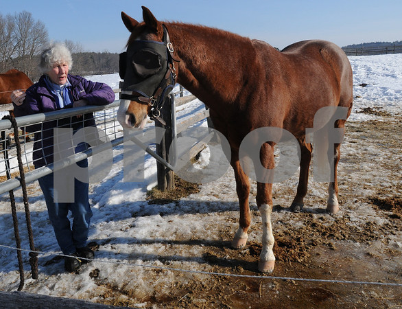 Hamilton:<br /> Susanna Collaredo, owner of the Black Oak Stables, provides foster care for 2 horses that have been surrendered due to a bad economy. Monty is one of the two horses.<br /> Photo by Ken Yuszkus/Salem News, Wednesday,  February 11, 2009.