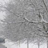 Beverly:<br /> A pedestrian walks near the snow encrusted trees along Lothrop Street. Light snow continued to fall during the day.<br /> Photo by Ken Yuszkus/Salem News, Monday, January 19, 2010.