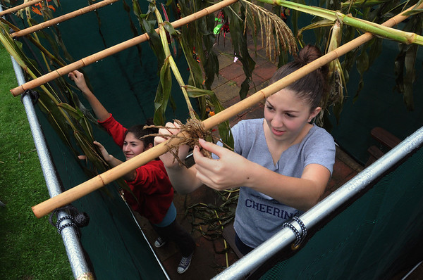 Swampscott:<br /> Julie Zabar, left, and her sister, Rachel, make adjustments to their Sukkah, which is in their backyard. The Zabar family will celebrate the Jewish holiday of Sukkot in their Sukkah.<br /> Photo by Ken Yuszkus/Salem News, Thursday, October 13, 2011.