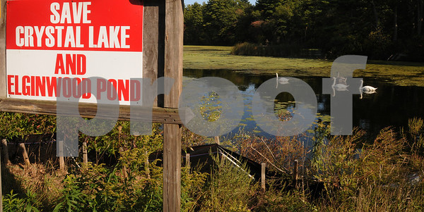 "Peabody:<br /> Swans swim on Crystal Lake through the weeds. The ""Save Crystal Lake and Elgin Pond "" sign is in the foreground.<br /> Photo by Ken Yuszkus/Salem News, Wednesday September 24, 2008."