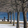 Beverly:<br /> A man walks his dogs along the line of trees at Danes Street Beach.<br /> Photo by Ken Yuszkus/Salem News, Thursday, January 6, 2011.