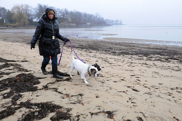Beverly:<br /> Christine Guido walks Zoe, in front,  Pepper, and Skippy, who is in back of Christine, along Dane Street Beach. On Wednesday morning she found  sewage treatment discs that had washed up on Dane Street Beach from a sewage treatment plant in Hookset, N.H.<br /> Photo by Ken Yuszkus/Salem News, Wednesday, March 16, 2011.