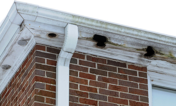Ipswich:<br /> Holes in the overhang of the roof where the vents fell out and the squirrels enlarged the holes at the Whittier Manor. It is one of the various problems on the grounds of the senior public housing that need to be corrected say residents.<br /> Photo by Ken Yuszkus/Salem News, Tuesday, January 5, 2010