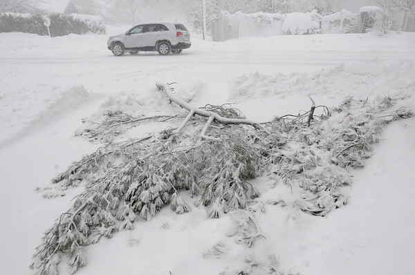 Danvers:<br /> A large pine branch lays on the road at the corner of Riding Club Road and Locust Street in Danvers Wednesday morning.<br /> Photo by Ken Yuszkus/Salem News, Wednesday, January 13, 2011.