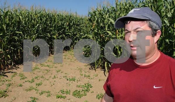 Danvers:<br /> Bobby Connors, owner of Connors Farm, is in part of his corn maze. The maze will open for the first time on September 13.<br /> Photo by Ken Yuszkus/Salem News Thursday, September 04, 2008