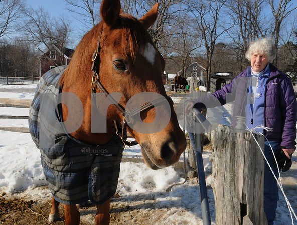 Hamilton:<br /> Susanna Collaredo, who owns the Black Oak Stables, provides foster care for 2 horses that have been surrendered due to a bad economy. Beans is one of the two horses.<br /> Photo by Ken Yuszkus/Salem News, Wednesday,  February 11, 2009.