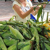 Salem:<br /> Ann Sweeten of Salem examines ears of corn before purchasing some at the Salem Farmers Market.<br /> Photo by Ken Yuszkus/Salem News, Thursday, July 5,  2012.