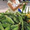 Salem:<br /> Ann Sweeten of Salem examines ears of corn before purchasing some at the Salem Farmers Market.<br /> Photo by Ken Yuszkus/Salem News, Thursday, July 5,  2012.