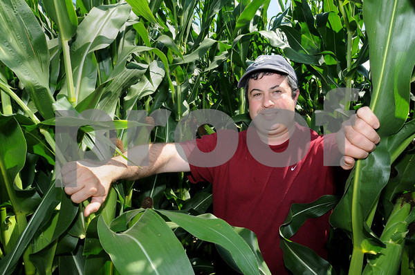 Danvers:<br /> Bobby Connors, owner of Connors Farm, is amongst the corn in his corn maze. The maze will open for the first time on September 13.<br /> Photo by Ken Yuszkus/Salem News Thursday, September 04, 2008