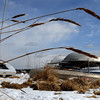Beverly:<br /> The tall grass bows to the wind near the stowed boats on the harbor's edge at the end of Water Street. The wind made the recent warmer temperatures seem colder.<br /> Photo by Ken Yuszkus/Salem News, Friday, February 19, 2010.