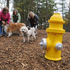 Beverly:<br /> From left, Ilene MacDonald, Tina McManus, co-chairs, and Susan Whitelocks, volunteer, of the Beverly Dog Park Committee, and in front from left are, Tina's dog, Casey, Ilene's dog Howie, and Susan's dog Bentley, at the new dog park.<br /> Photo by Ken Yuszkus/Salem News, Wednesday, October 26, 2011.