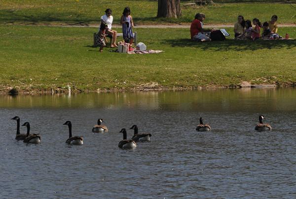 Hamilton:<br /> The pond in Patton Park in Hamilton.<br /> Photo by Ken Yuszkus/Salem News, Monday, April 16, 2012.