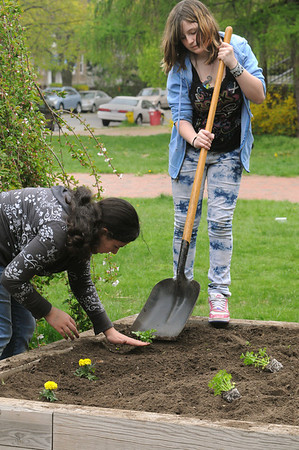 Salem:<br /> Mikayla Feliz, left, places various seedlings into the prepared soil of the raised beds in front of the Saltonstall School with the help of Nicole LaVallo, both 8th graders at the school, as part of the Earth Day programs on Wednesday morning.<br /> Photo by Ken Yuszkus/Salem News, Wednesday, May 4, 2011.