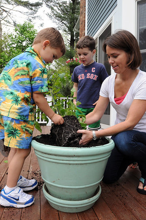 Hamilton:<br /> From left, Kyle, 4, Brady, 5, and their mother, Jennifer Daniels, plant a tomato plant into a large pot on the deck at their home.<br /> Photo by Ken Yuszkus/Salem News, Thursday, May 19, 2011.