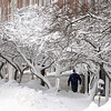 Salem:<br /> A pedestrian walks along Washington Street past the snow coated trees during the snowstorm on Monday morning.<br /> Photo by Ken Yuszkus/Salem,  News, Monday,  December 27, 2010.